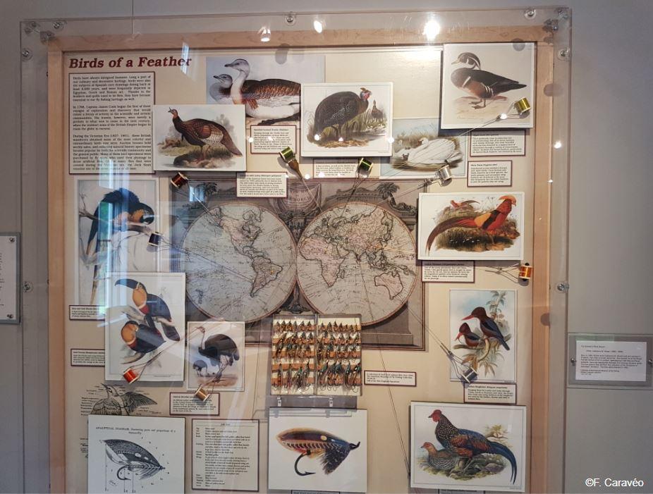 Des oiseaux et des plumes pour faire des mouches