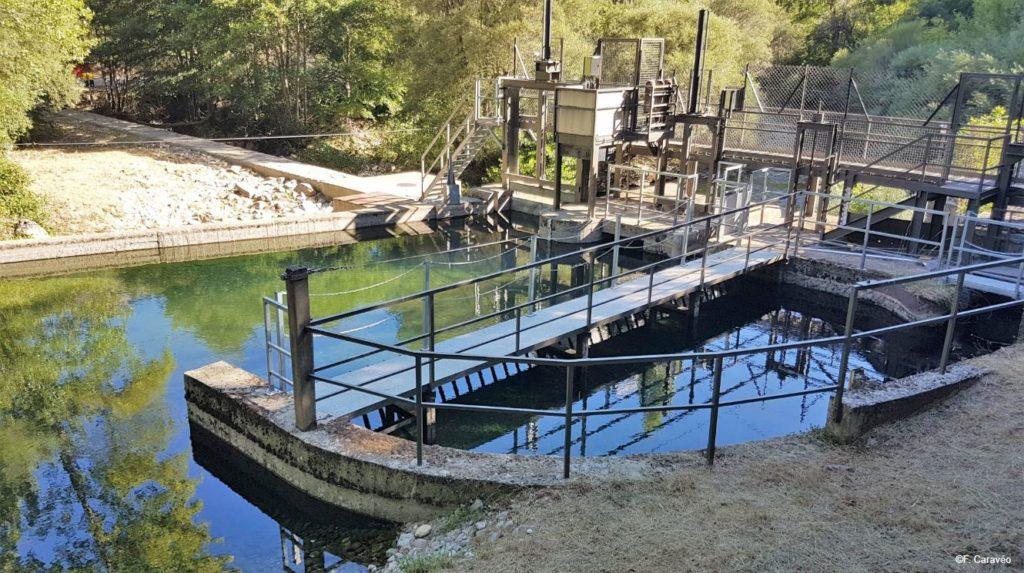 Rapport Riverwatch : menace hydroélectrique autour de la Méditerranée