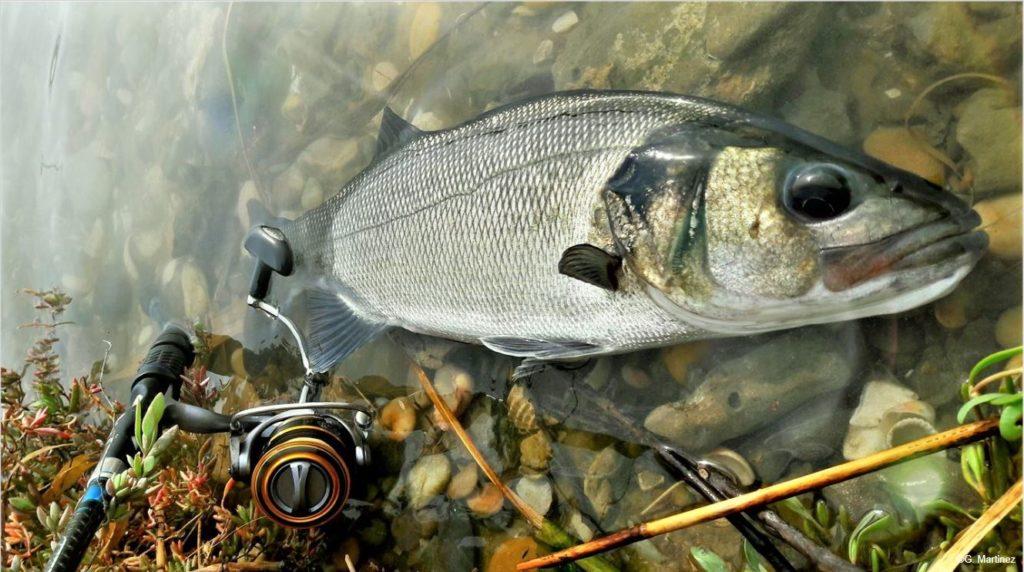 La pêche de loisir représente 5% des poissons capturés en Méditerranée